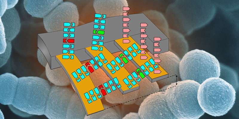 Quick and sensitive identification of multidrug-resistant germs