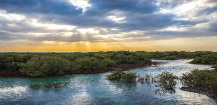 Researchers uncover an overlooked process enhancing the carbon-removal potential of mangroves