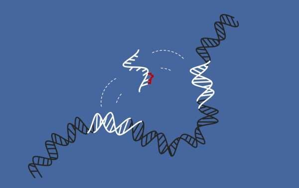 Study provides new data on 'jumping genes' linked to cancer, which could pave the way to new treatments and better diagnoses of