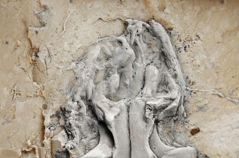 World's earliest python found