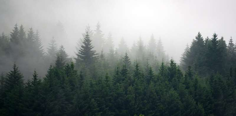 Carbon dioxide feeds plants, but are Earth's plants getting full?