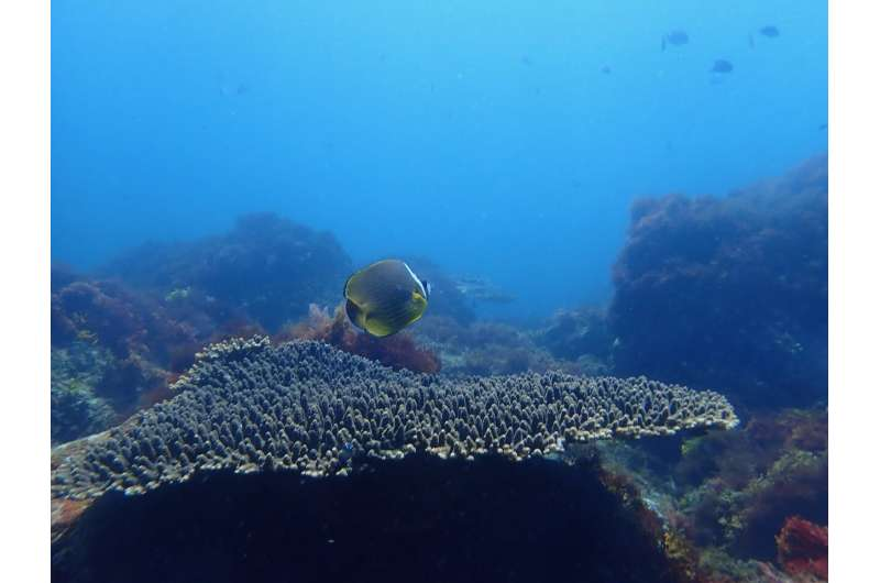 Rising carbon dioxide levels will change marine habitats and fish communities