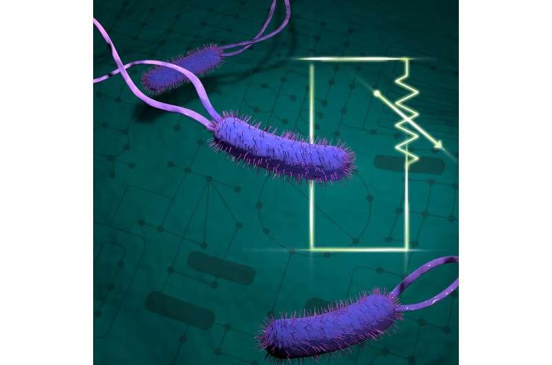 Understanding bacteria's metabolism could improve biofuel production