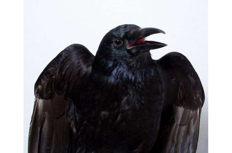 Researchers show conscious processes in birds' brains for the first time
