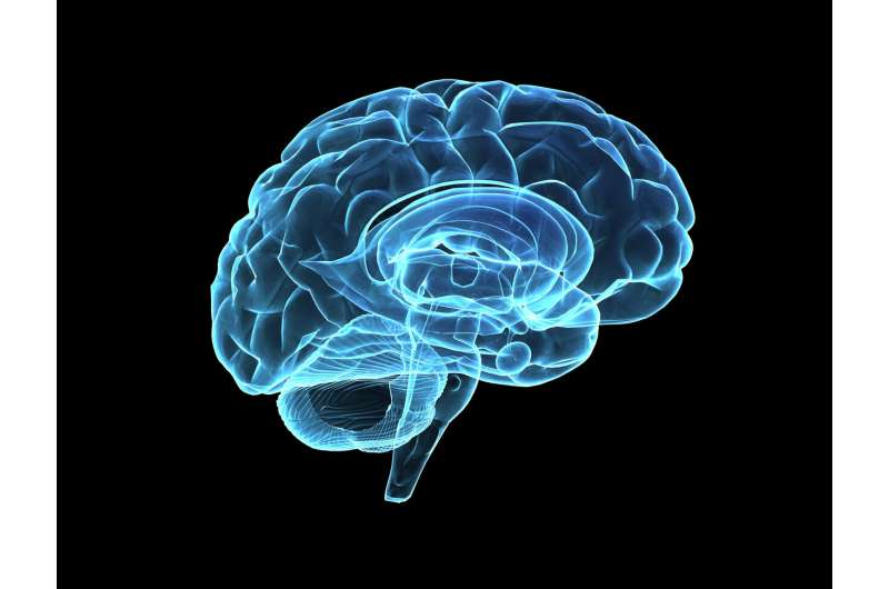 Measuring the complexity of the brain