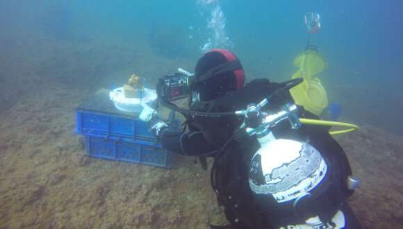 Researchers go underwater to study how sponge species vanished
