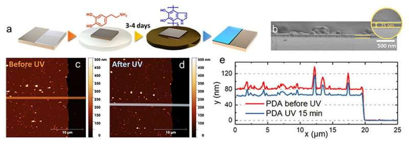 Ultraviolet light exposure enhances the protective ability of synthetic melanin