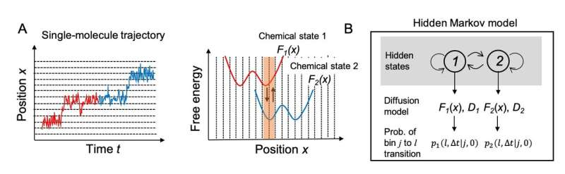 Mathematical modeling revealed how chitinase, a molecular monorail, obeys a one-way sign