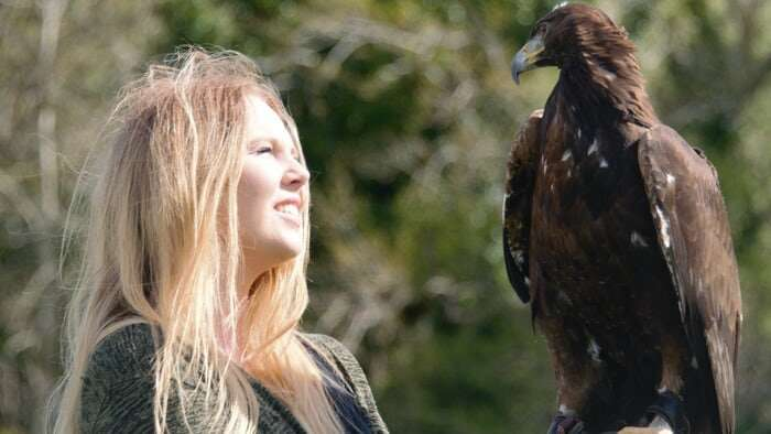 New study shows iconic golden eagle was once common throughout Wales