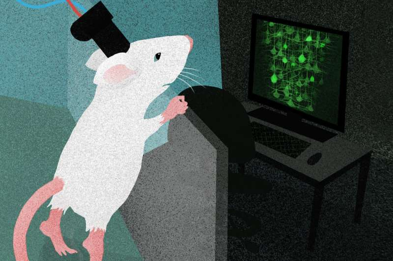Observing the freely behaving brain in action