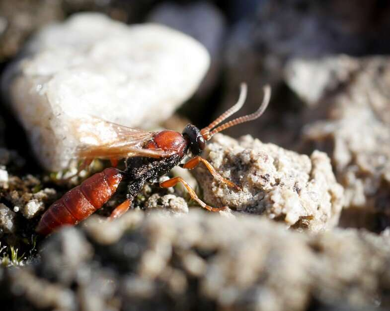 Climate change recasts the insect communities of the Arctic