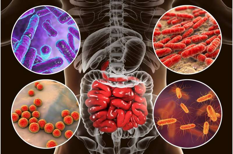 Scientists develop mathematical index to distinguish healthy microbiome from diseased