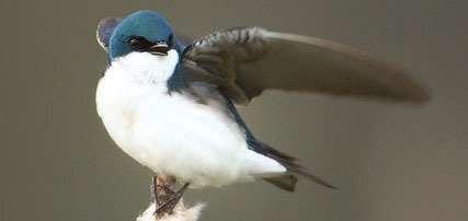 Climate change threatens breeding birds