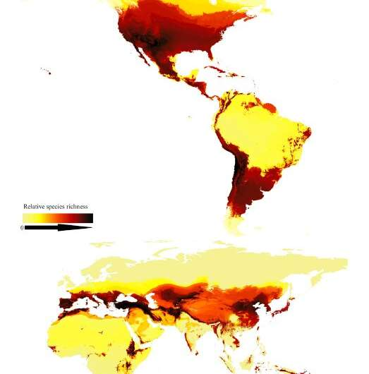 Researchers create first map of bee species around the globe