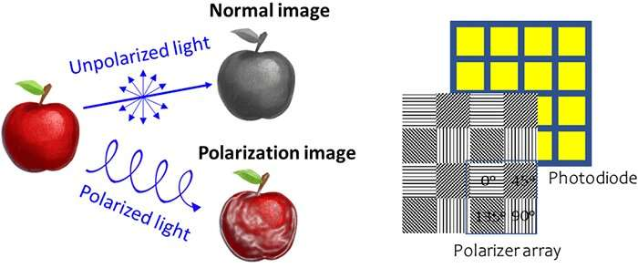 Highly sensitive detection of circularly polarized light without a filter