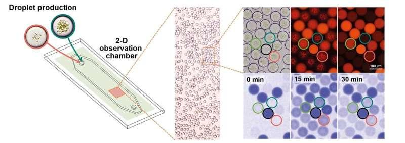 "Researchers develop an ""artificial chloroplast"""