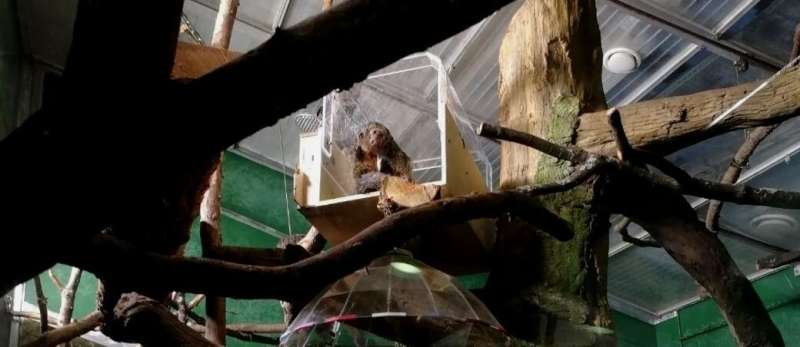 Scientists develop a device to allow monkeys in a Finnish zoo to play sounds and music
