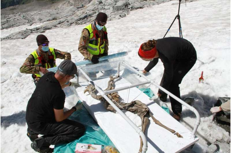 A 400-year-old chamois will serve as a model for research on ice mummies