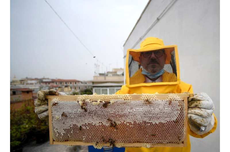 A beekeeper from the forestry unit of the carabinieri, or military police force, shows alveolus and bees on the rooftop of the c