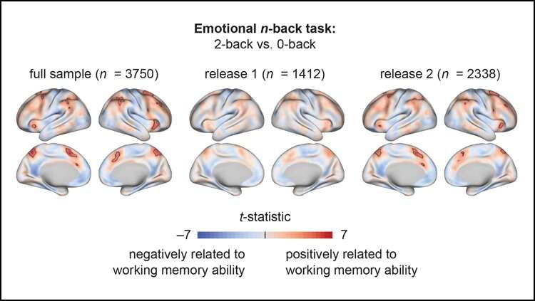 A child's brain activity reveals their memory ability