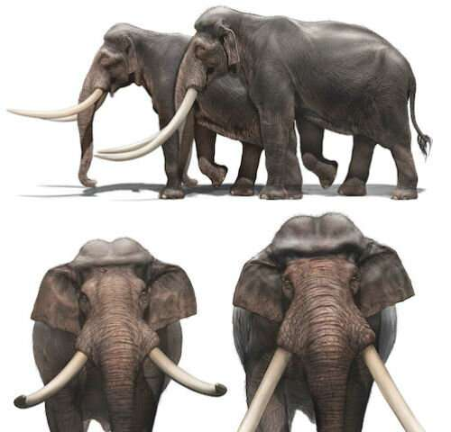 A chronicle of giant straight-tusked elephants