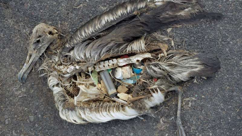 Activists use shocking social media imagery to inspire action in the fight against plastic pollution