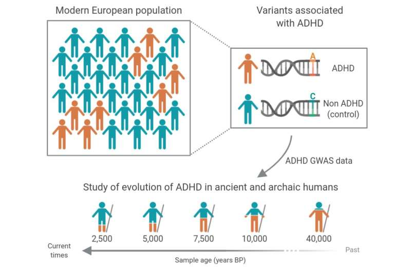 ADHD: genomic analysis in samples of Neanderthals and modern humans