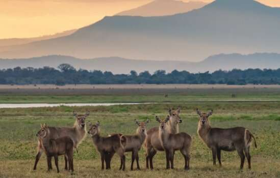 After a civil war, Gorongosa National Park savanna doesn't quite look the same