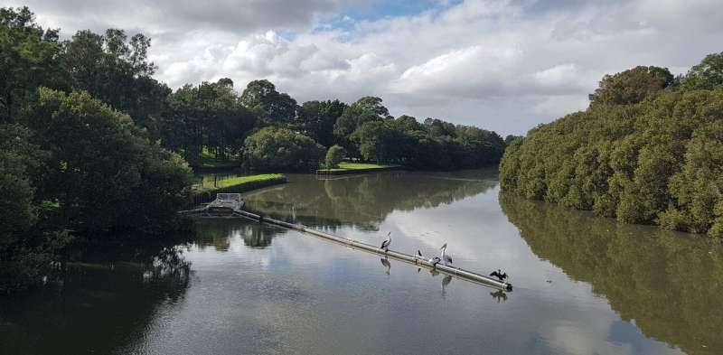 After a storm, microplastics in Sydney's Cooks River increased 40 fold