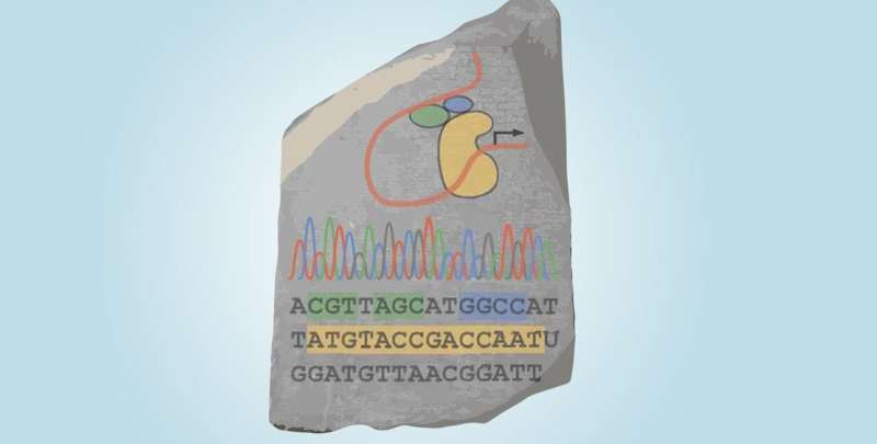 """A """"genomic rosetta stone"""" for discovering the rules of gene regulation"""