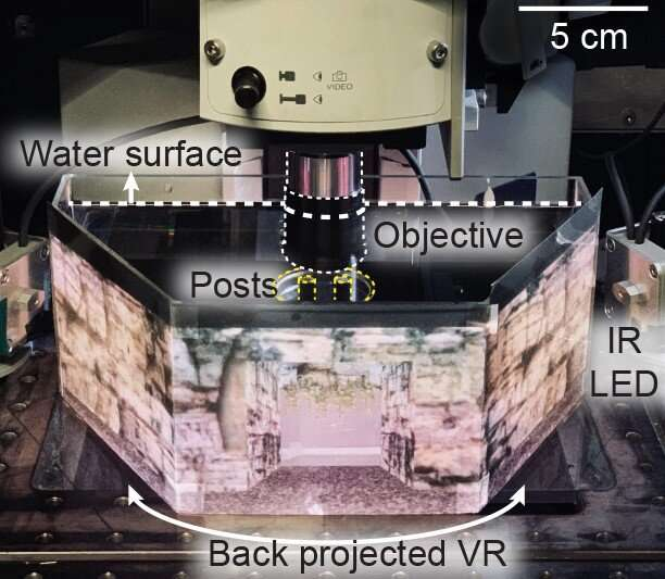 A glitch in the Matrix: Using virtual reality to understand how fish predict the future
