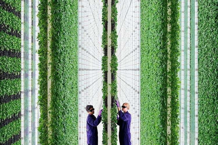 AI-controlled vertical farms promise revolution in food production