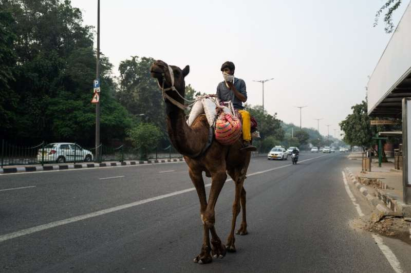 A man uses his mobile phone as he rides a camel along a street in smoggy New Delhi