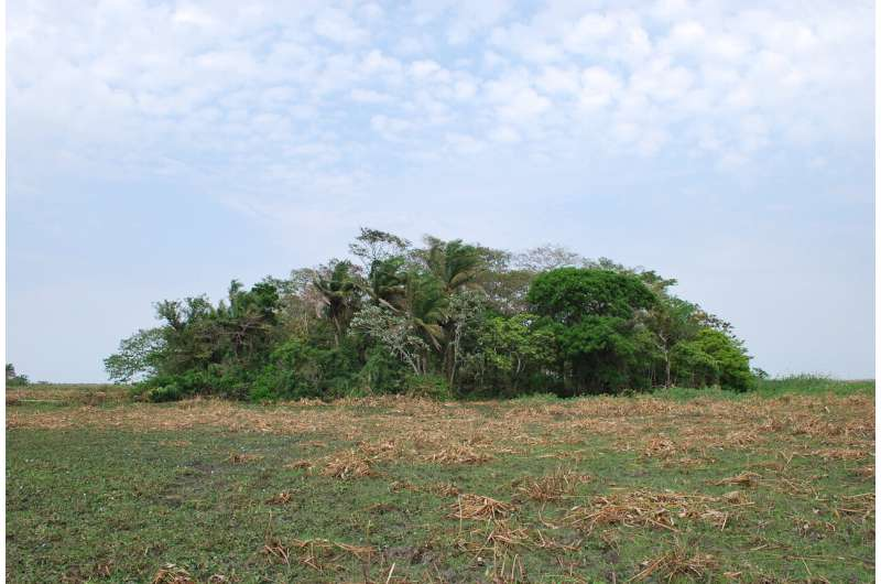 Amazonian crops domesticated 10,000 years ago