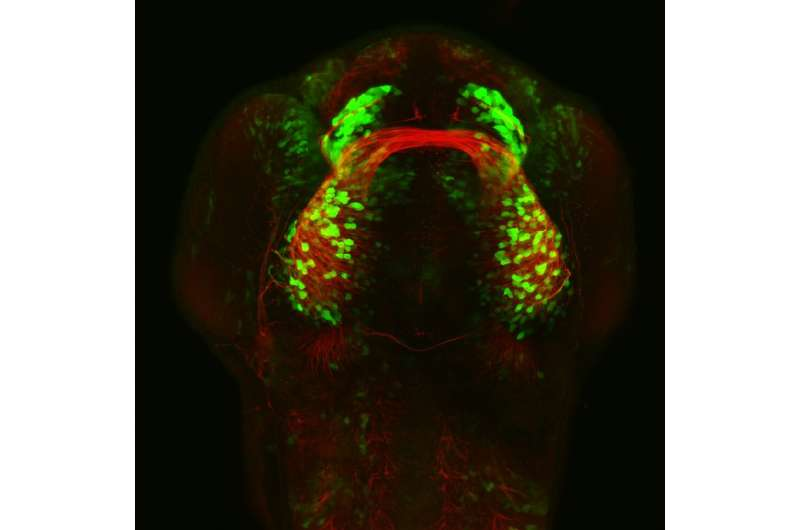 A molecule that directs neurons