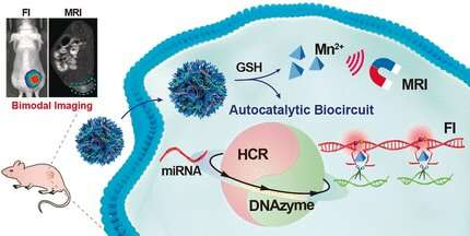 Amplification and imaging of microRNA as a biomarker to detect tumor development