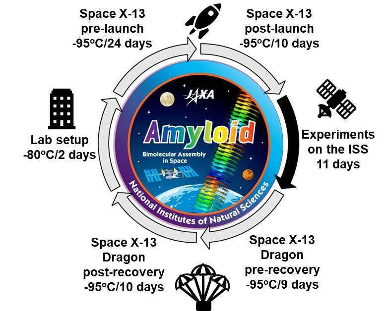 Amyloid formation in the International Space Station