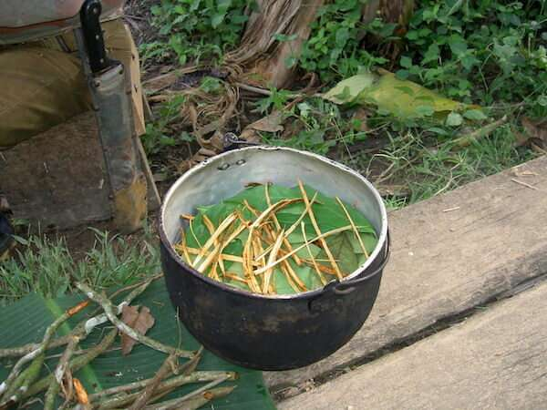 An Amazonian tea stimulates the formation of new neurons