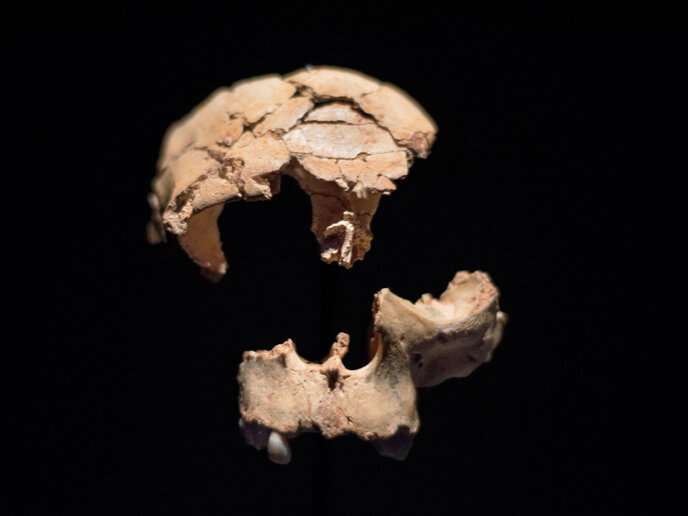 Ancient cannibal tooth provides oldest ever evidence of human ancestors