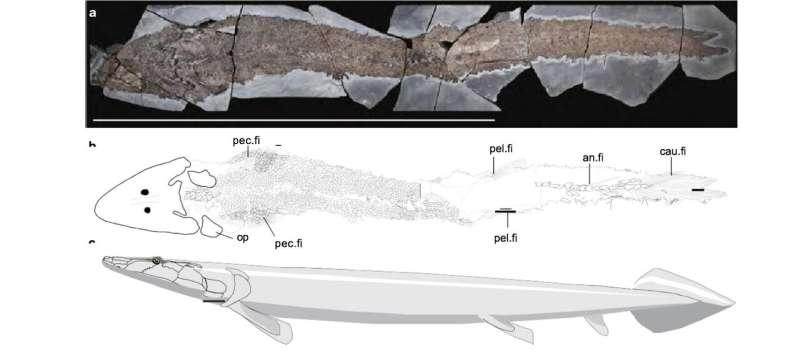 Ancient fish fossil reveals evolutionary origin of the human hand