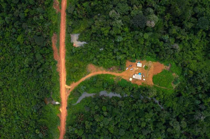 A new assessment of how wild forests are maintained showed that indigenous people have tenure over 36 percent of Earth's remaini