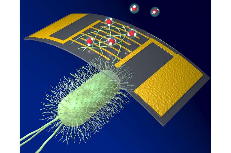 A new, highly sensitive chemical sensor uses protein nanowires