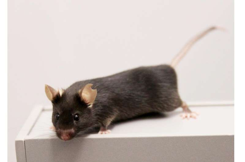 Animal-based research: New experimental design for an improved reproducibility