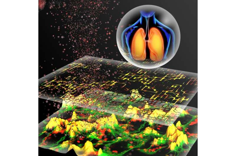 Animal-free method predicts nanoparticle toxicity for safer industrial materials