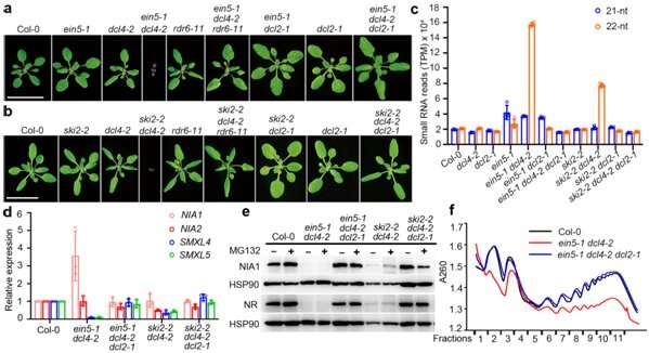 A novel RNA interference mechanism dictates plant response to external stress