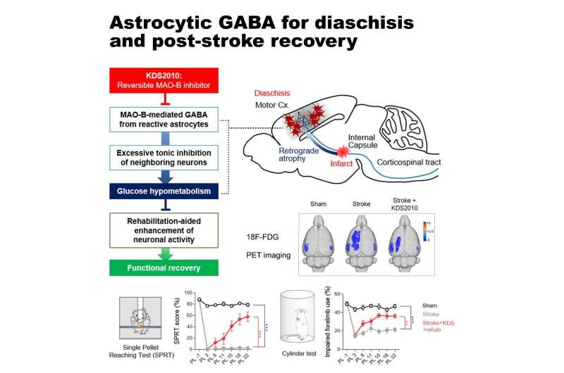 A novel therapeutic target for recovery after stroke