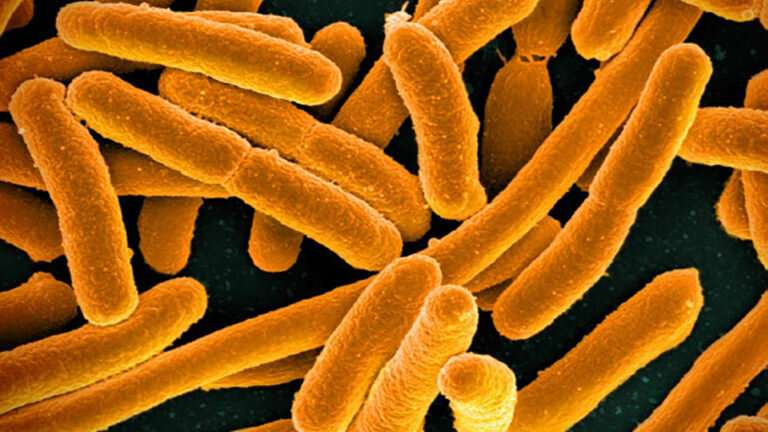 Antibiotic exposure can 'prime' single-resistant bacteria to become multidrug-resistant