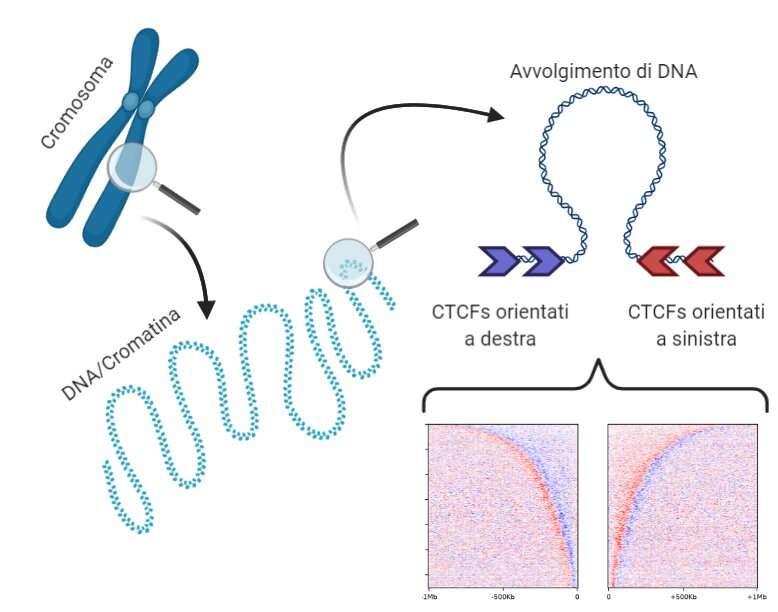 """A Politecnico di Milano study reveals DNA """"grammar"""""""