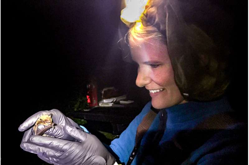 Are bats to blame for the coronavirus crisis?