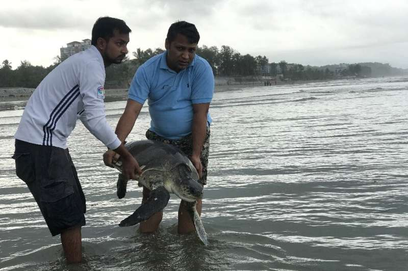 A rescued turtle is released back into the sea at Cox's Bazar. At least 20 were killed and dozens trapped in tonnes of plastic w
